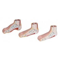Ensemble miniature modèle de pied 12 x 5 x 6 cm